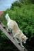 Rot Kreuz-Tag 2013, Kreisverband des BRK Ansbach, Rettungshundestaffel