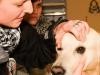erste-hilfe-hund-20131217-19-15-17