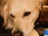 erste-hilfe-hund-20131217-21-01-00