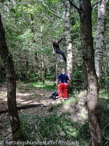 Person hängt am Seil am Baum