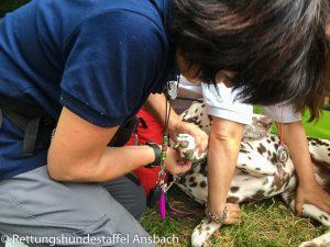 Station Erste Hilfe Hund
